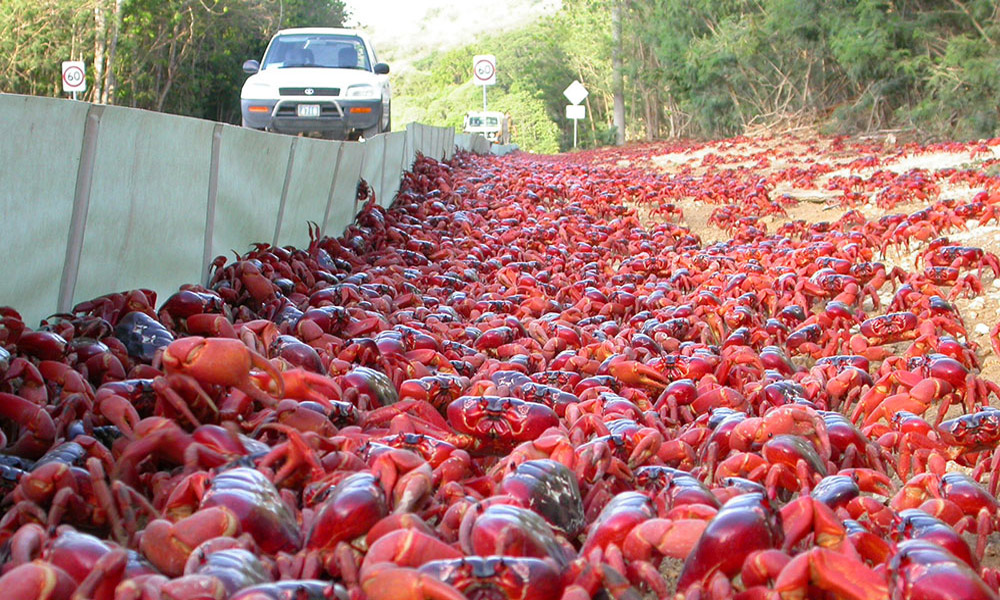crab-migeration