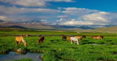 deosai-national-park-pakistan.adapt.1190.1