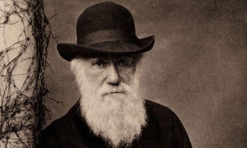 darwin-