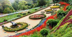 chd-rose-garden