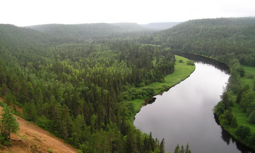 russian-forests