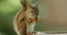 squirrel-bridge2