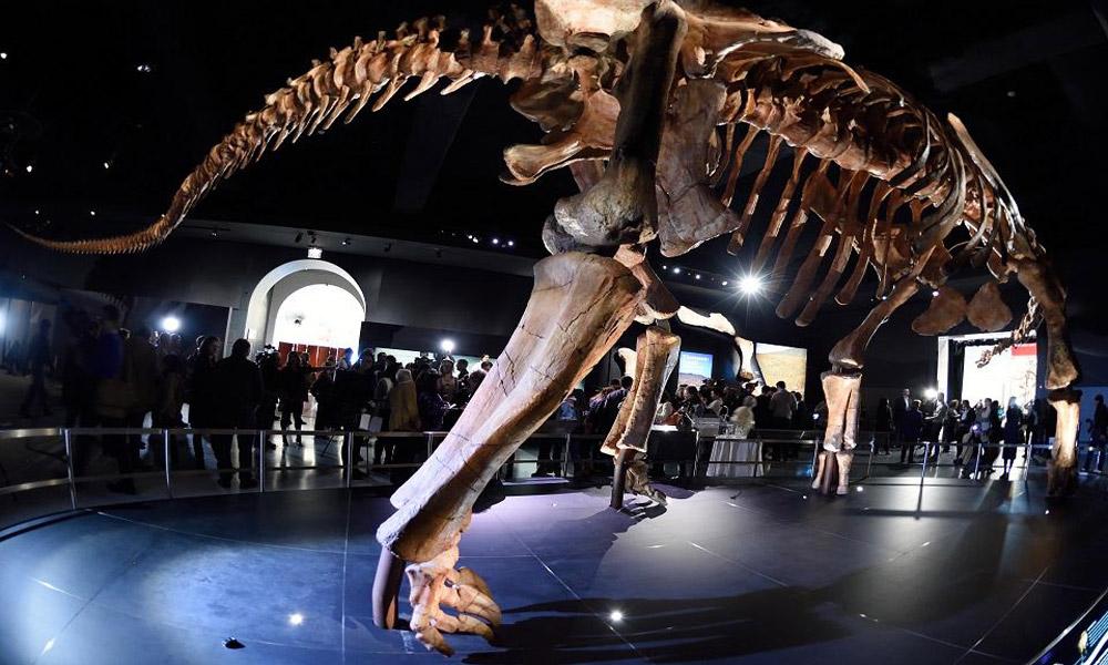american-natural-museum