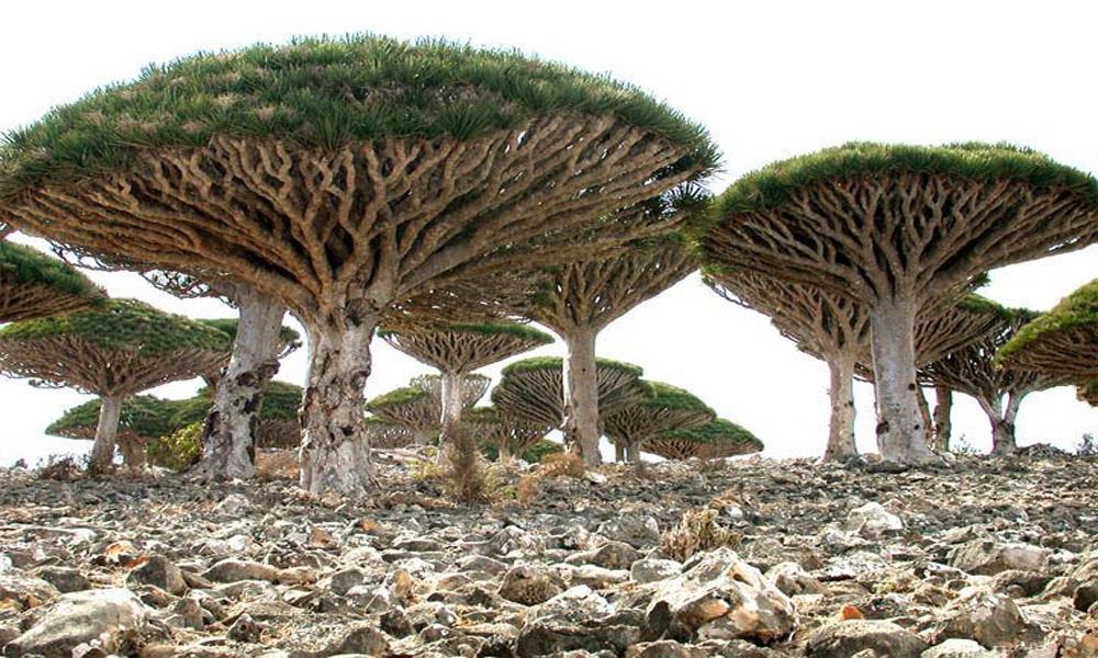 Socotra-Island-in-Yemen