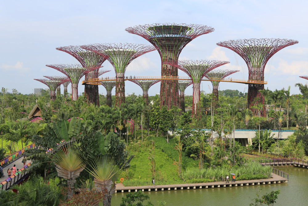 """The """"supertrees"""" tower over the Gardens By The Bay. The tallest one will even have a restaurant in it (which isn't open yet)."""