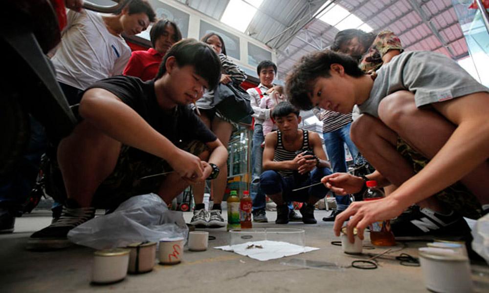 جیرجیرک ها در چین