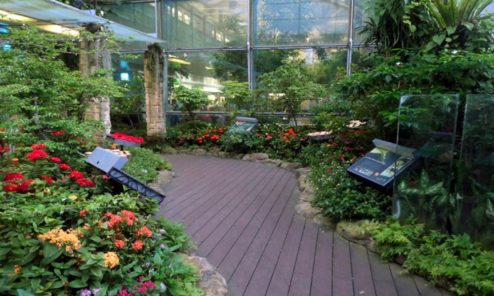 butterfly-garden-changi-international-airport