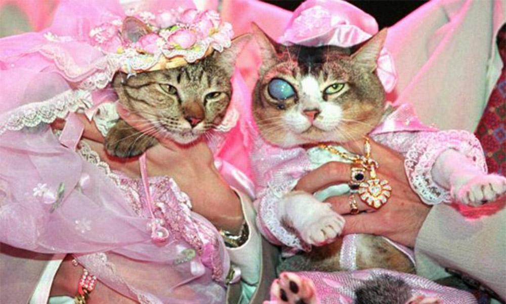 مراسم ازدواج حیوانات خانگی