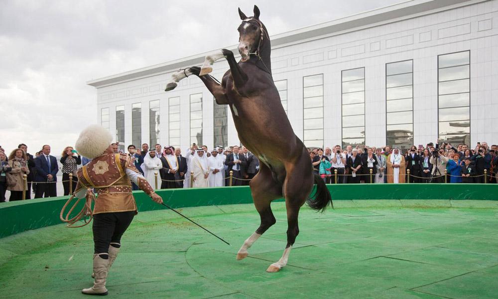 آموزش اسب در ترکمنستان