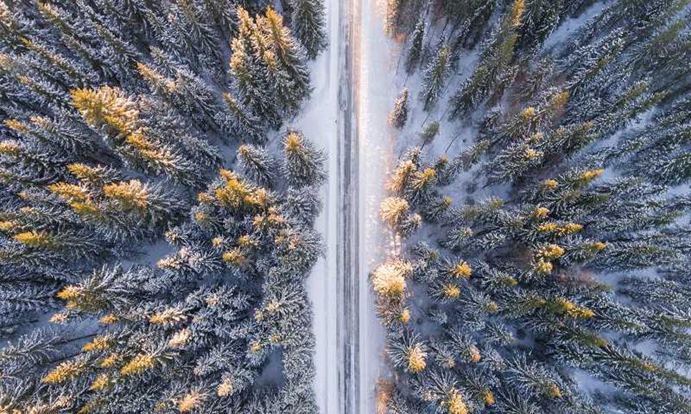 نمایی از جنگل های نروژ