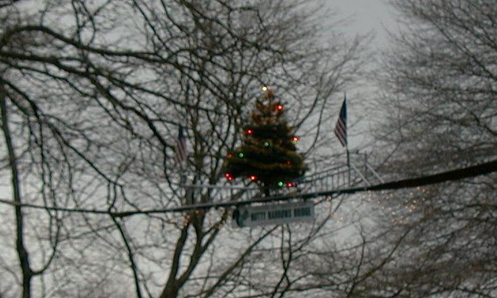 squirrel-bridge