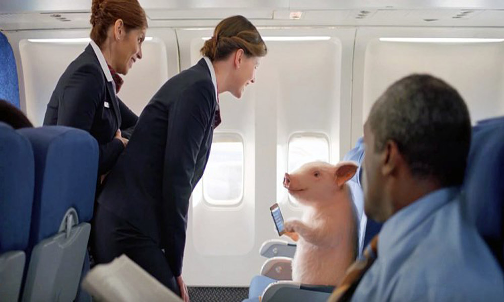 pigs-on-airplane