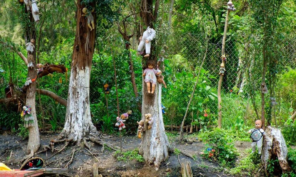 جنگل خود کشی