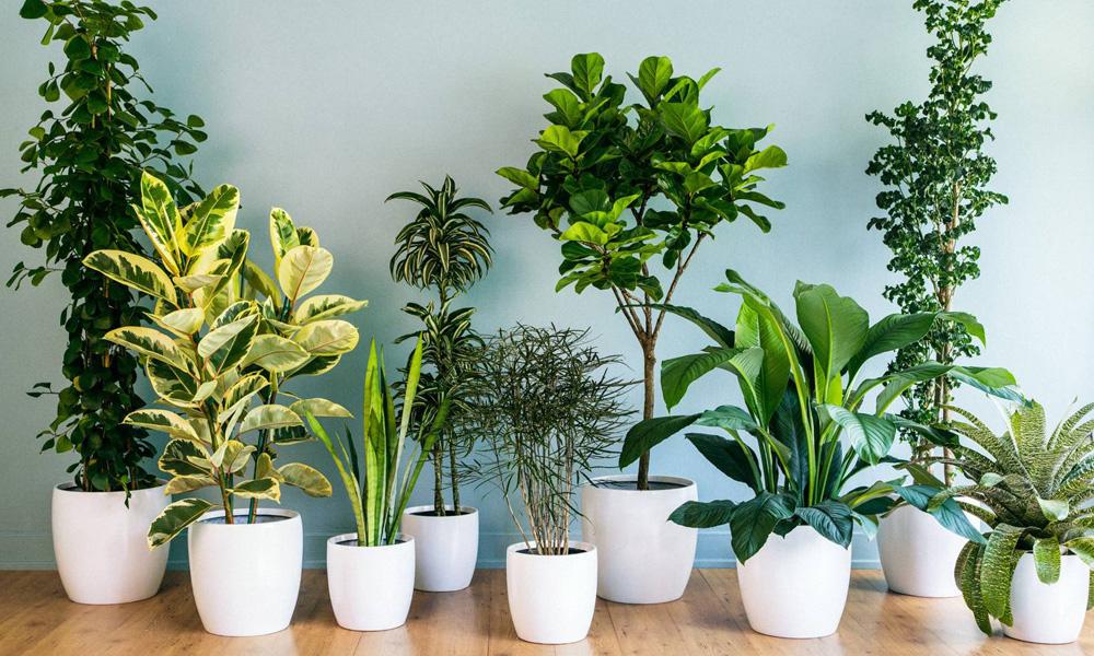 مراقب از گیاهان آپارتمانی در سفر